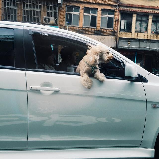 Levar animais no banco da frente